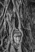 THAILAND. <br />Buddha Head in Tree Roots, Wat Mahathat, Ayutthaya.<br />2007