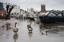 Geese and ducks swim in waters that have flooded a riverside road in Henley On Thames in Oxfordshire, as heavy rains in the River Thames catchment area and saturated ground causes the river to rise to within inches of bursting its banks.. April 02 2018.