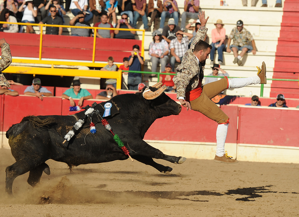 BEA AHBECK/NEWS-SENTINEL<br /> A member of the Aposento de Turlock goes airborne during the fifth grab (their third) during the bloodless bullfight during the Our Lady of Fatima Portuguese Festival in Thornton Saturday, Oct. 14, 2017.