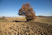tree near a plowed field in France Languedoc Aude Razes