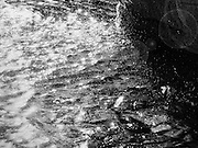 Joy of Water Abstract: Sparkling water droplets waves and sun flare abstract black and white monochrome fine art photograph. Irrigation has brought water to the desert. Phoenix, Arizona.