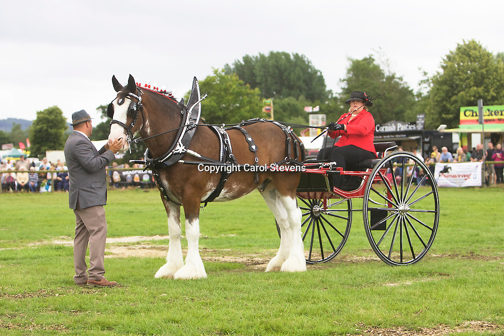 Margo McIntyre driving John McIntyre's Clydesdale, Bailey<br />