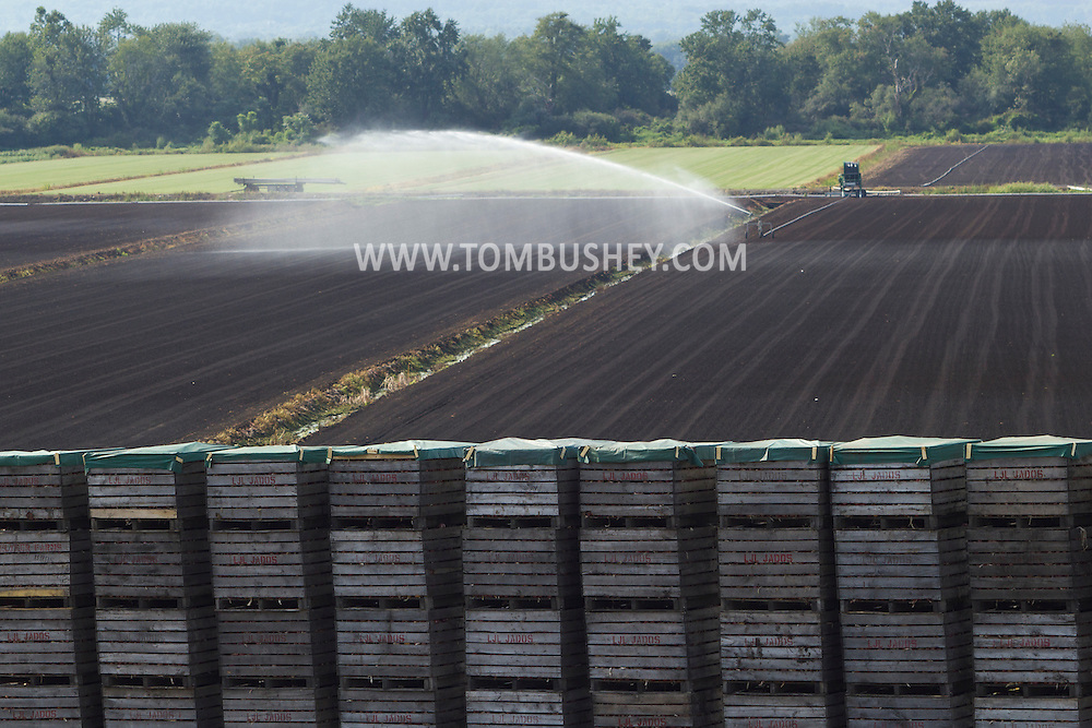 Pine Island, New York - Irrigation water sprays over a Black Dirt farm field behind stacked crates full of onions on Aug. 24, 2012. ©Tom Bushey / The Image Works