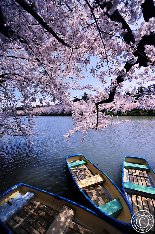 The northern moat of Hirosaki Castle Park in spring time.  Tourists can row the boats along the moat which is adorned with beautiful cherry blossoms.<br />