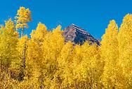 Fall foliage at the Maroon Bells in Aspen, Colorado.