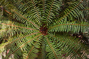 Fisheye view of fern, Rob Roy Glacier Track