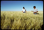 02: NAVAJO FARM WHEAT FIELDS