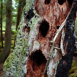Tree Bark Detail, Shaw Island, Washington, US