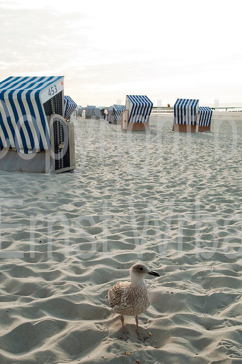 Strandkoerbe am Strand, Nord-Badestrand, Norderney, Ostfriesische Insel, Nordseekueste, Ostfriesland, Niedersachsen, Deutschland.| .beach chairs on the beach, Norderney, North Sea island, Ostfriesland, Lower Saxony, Germany.