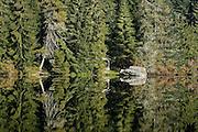 Naturpark Schwarzwald Mitte-Nord..Glaswaldsee (Bergsee im Nadelwald)