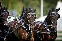 Real Garcia Juan Antonio, (ESP), Black Ace, Curios, Sam, Vizier<br /> Dressage test<br /> FEI European Championships - Aachen 2015<br /> © Hippo Foto - Dirk Caremans<br /> 20/08/15