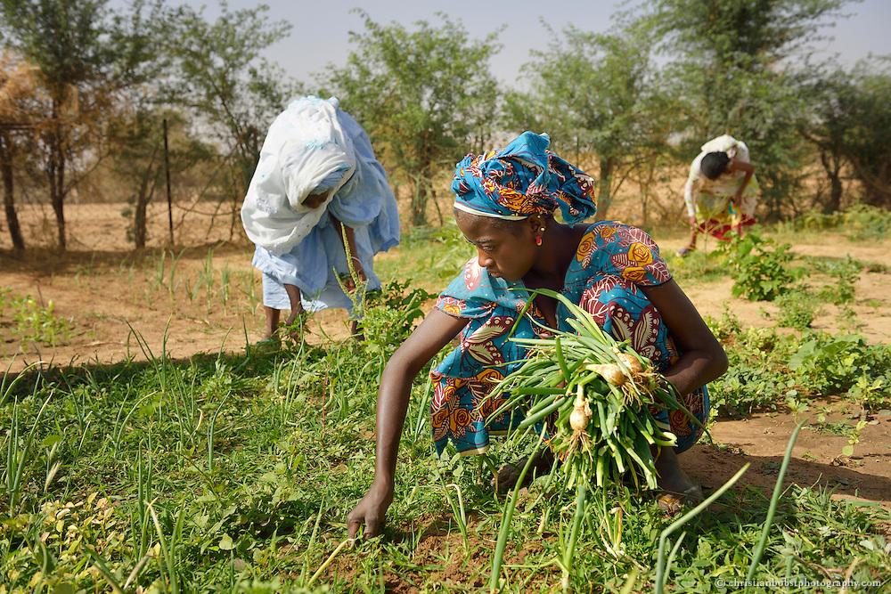 Dank eines von HEKS mitfinanzierten Bohrbrunnen können Frauen im sehr heissen und trockenen YOUNOUFERE in Senegal einen Garten anlegen und  Gemüse anbauen.
