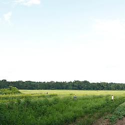 The Crimson and Clover Farm in Northampton, Massachusetts.