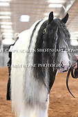 04. MARES 3 YRS OLD