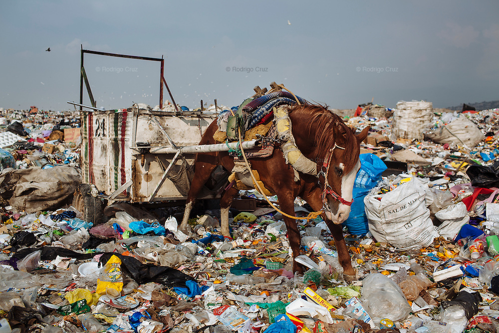 A horse tries to pull a tumbril among the garbage in Ciudad Nezahualcoyotl, March 28, 2011.