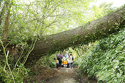 © Licensed to London News Pictures. 27/04/2019. Pilton, UK. A giant ash tree has fallen across a road near Pilton in Somerset as Storm Hannah hits parts of the UK. Photo credit: Jason Bryant/LNP