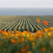 Matt Smiley FVC; Jacob's Farm; San Jose, CA; Santa Cruz, CA