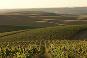 Seven Hills Vineyard, Walla Walla, Washington