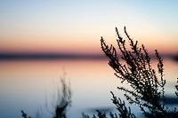 Il complesso produttivo delle saline è situato nel comune italiano di Margherita di Savoia (nome dato dagli abitanti in onore alla regina d'Italia che molto si adoperò nei confronti dei salinieri) nella provincia di Barletta-Andria-Trani in Puglia. Sono le più grandi d'Europa e le seconde nel mondo, in grado di produrre circa la metà del sale marino nazionale (500.000 di tonnellate annue).All'interno dei suoi bacini si sono insediate popolazioni di uccelli migratori e non, divenuti stanziali quali il fenicottero rosa, airone cenerino, garzetta, avocetta, cavaliere d'Italia, chiurlo, chiurlotello, fischione, volpoca..Paricolare della vegetazione spontanea del posto, e sullo sfondo il tramonto sulle acque dei bacini.