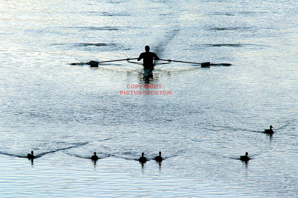 An early morning rower gets a natural escort through Boston's Charles River.
