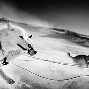 Greenland, Reportage, -35 degrees, Story Melting Ice, Ilulissat