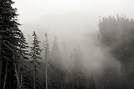 Foggy Morning in Mt. Rainier National Park, WA