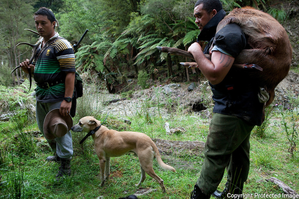 RUATAHUNA, NEW ZEALAND -- FEBRUARY 15: Rangi Mataamua and Puke Timoti hunt for pigs and deer in Ohaua....CONTACT:.Rangi Mataamua.+64 (0)7 3663477.r.mataamua@massey.ac.nz..Photo By Amy Toensing _________________________________<br />