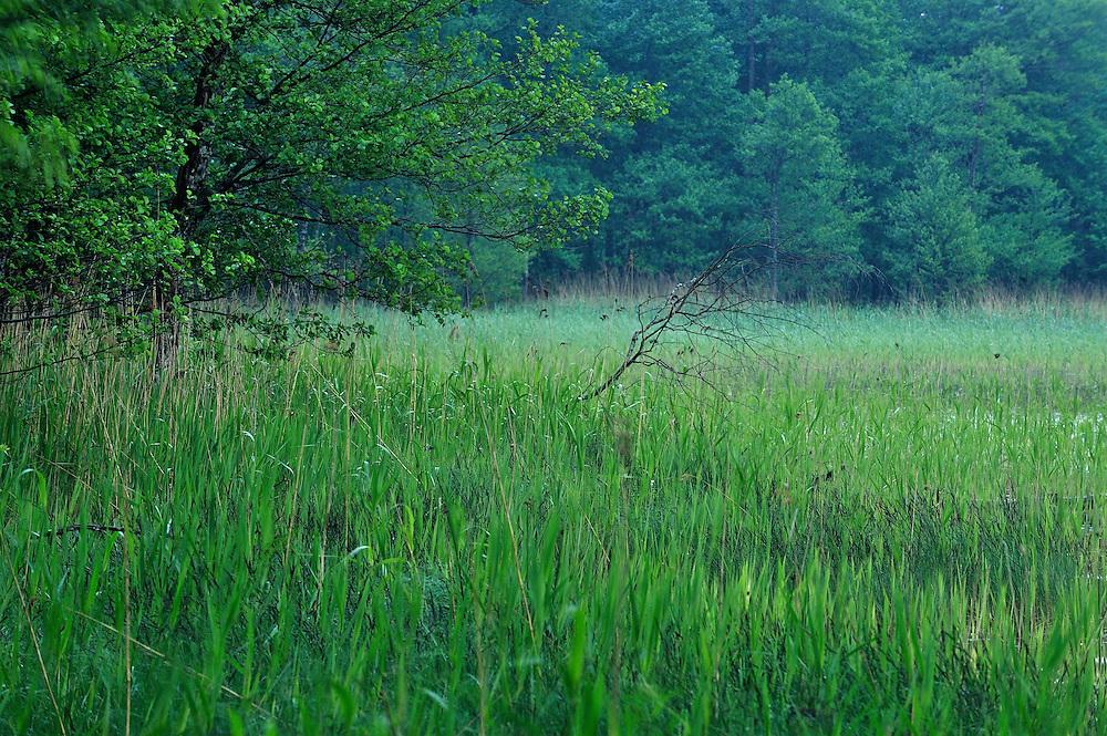 Moricsala Strict Nature Reserve, Moricsala Island, Lake Usma, Latvia