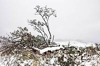 Árvores cobertas de neve.  Urubici, Santa Catarina, Brasil. / <br /> Trees covered by snow.  Urubici, Santa Catarina, Brazil.