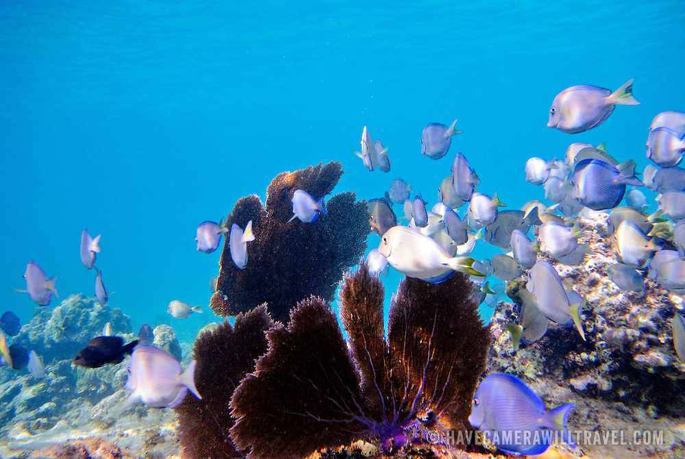 Coral reef and fish, underwater shots at St. John, US Virgin Islands
