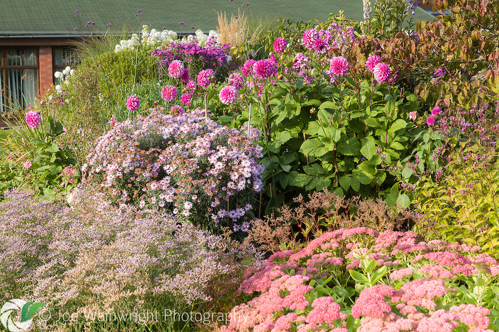 Colouful herbaceous borders in the Walled Garden at Holehird Gardens, Cumbria, photographed in October. Planting includes Dahlias, Asters and Sedum.