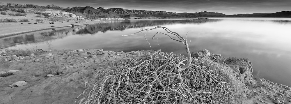A tumble weeds on the shoreline of Lake Mead near the south cove take out.