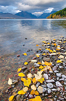 Fallen leaves dotting the shore of Lake McDonald, Glacier National Park Montana USA