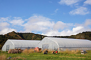 Tunnelväxthus hos Oceanside Farms i Homer, Alaska, USA