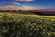Sunset in the field of wheat in Tuscany
