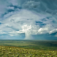 thunder head, anvil cloud, drops rain in mushroom cloud, storm clouds over montana prairie