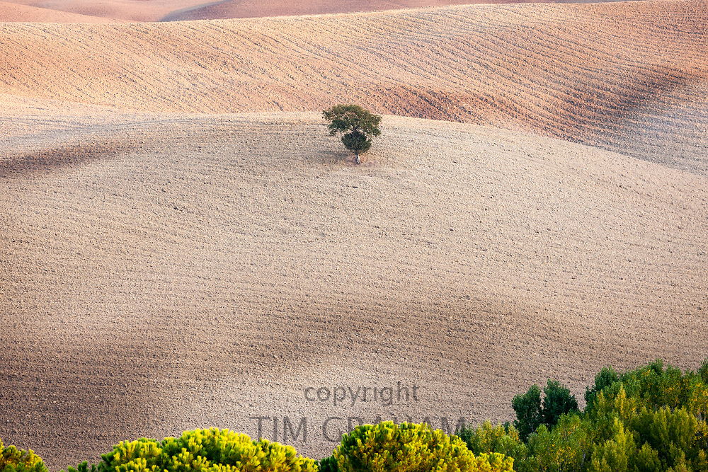 Lone tree in a Tuscan landscape near San Quirico D'Orcia  in Val D'Orcia, Tuscany, Italy<br /> FINE ART PHOTOGRAPHY by Tim GrahamFINE ART PHOTOGRAPHY by Tim Graham