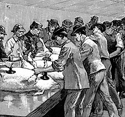 One of the earliest production lines:  Armour Company's pig slaughterhouse, Chicago. Pigs walked up ramp to top of building, then were processed & emerged as finished carcasses. Hand-washing carcasses after de-bristling. Wood engraving Paris 1892.
