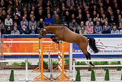 135, Martino<br /> KWPN hengstenkeuring - 's Hertogenbosch 2020<br /> © Hippo Foto - Dirk Caremans<br />  30/01/2020