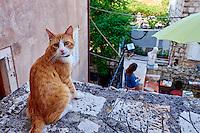 Croatie, Dalmatie, côte dalmate, Dubrovnik, centre historique classé Patrimoine Mondial de l'UNESCO, vieille ville // Croatia, Dalmatia, Dubrovnik, historical centre, Unesco World Heritage site, old town
