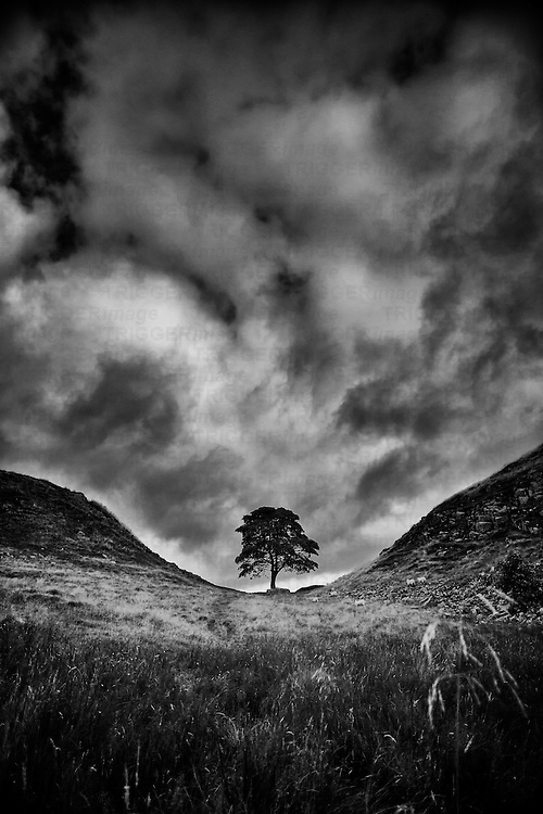 Remote tree alone in desolate hilly landscape