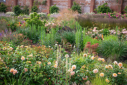 General view of the rose garden at Wynyard Hall. Mixed planting includes  roses, sanguisorba, catmint, phlomis, veronicastrum, grasses and foxgloves.