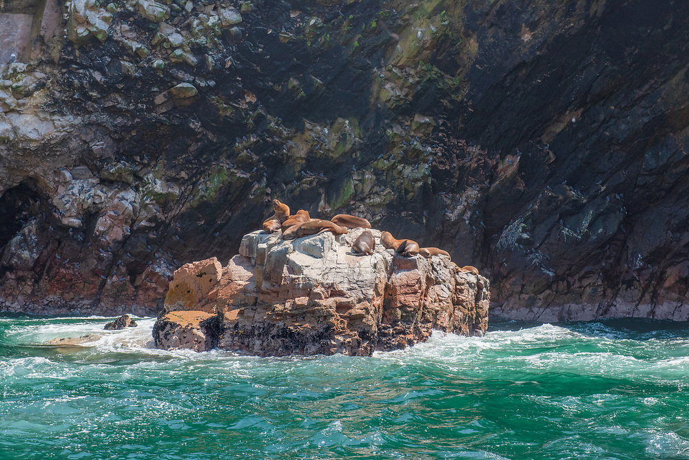 Clise in shot of Sea Lions on rocks surrounded by water.