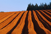 Recently planted field<br /> Cape Tryon<br /> Prince Edward Island<br /> Canada