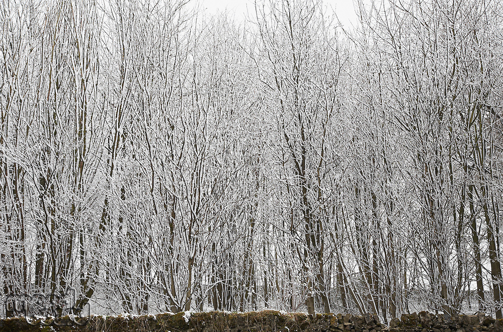 Snow covered trees behind stone wall