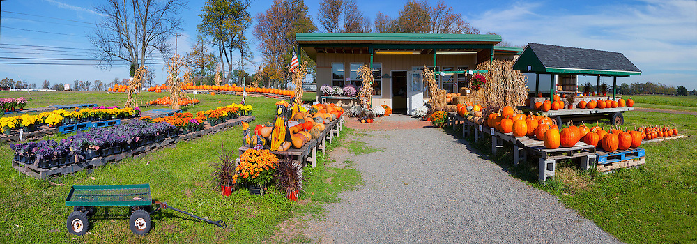 Country Road Stand in Fall