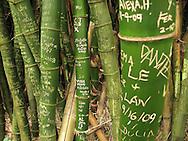 Graffiti carved into bamboo on the Hawaiian island of Oahu.