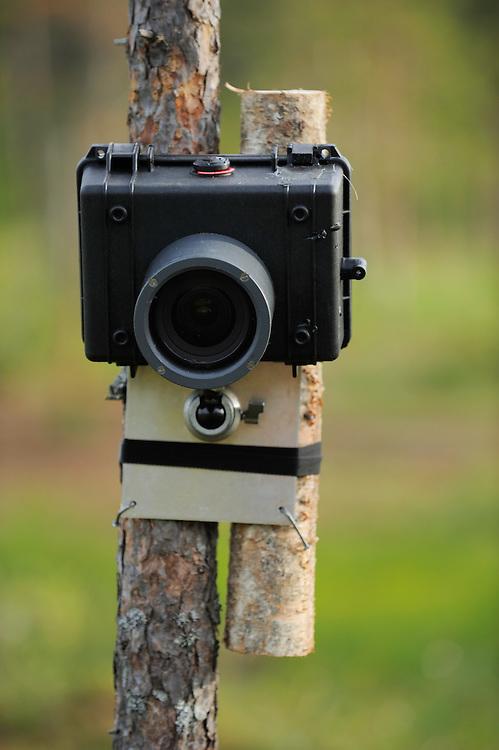 Remote camera.Kuhmo, Finland