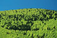 France, Languedoc Roussillon, Lozère,  Cevennes, région Villefort