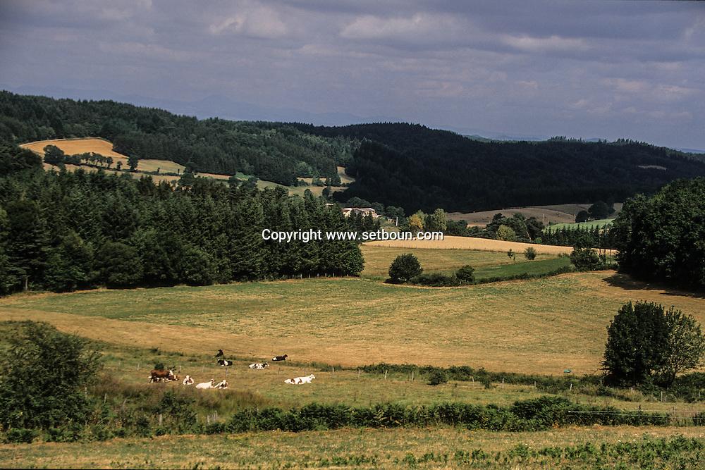 France. massif central. massif central. landscape  Issoire area near Usson village    France  /   Massif central  paysage  region de  Issoire champs de ble et vallee autour Usson    France